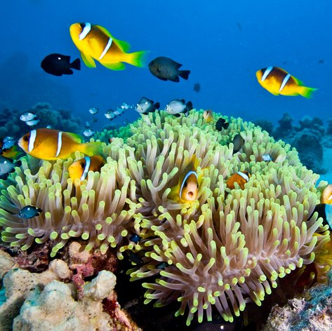 Great Barrier Reef photo 33