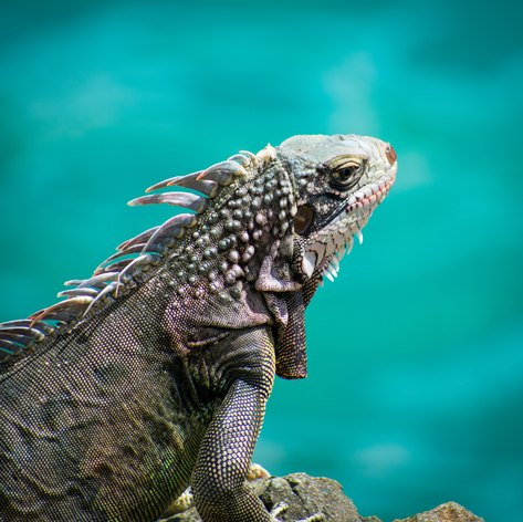 Virgin Islands photo 32