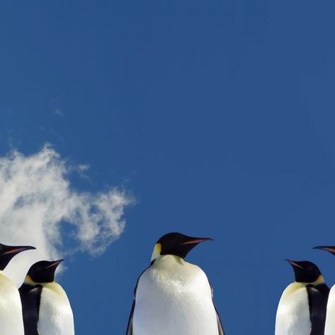 Penguins against the sky