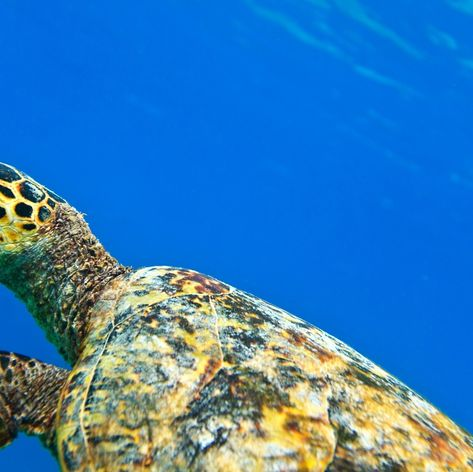 Meet the Gentle Giants of the Indian Ocean