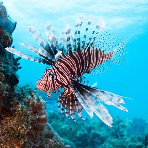 Rare and exotic aquatic life