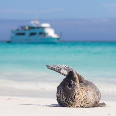 Galapagos Islands photo 32