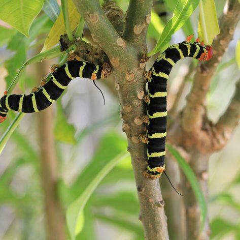 Meet the Unusual Species Which Inhabit Antigua