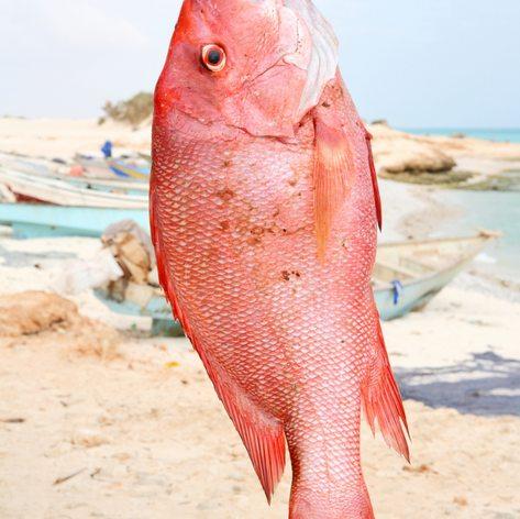 Socotra photo 14