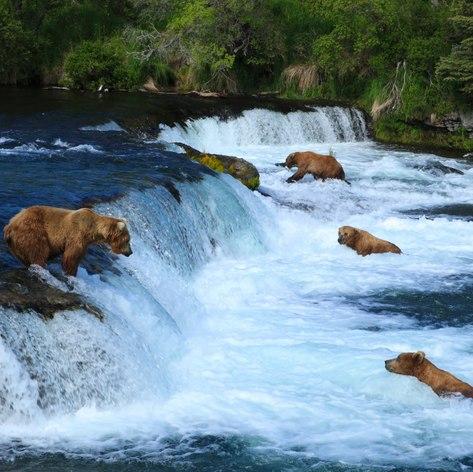 Alaska photo 8