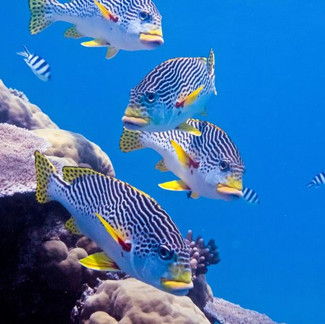 Great Barrier Reef photo 8