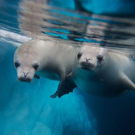 Antarctica photo 8