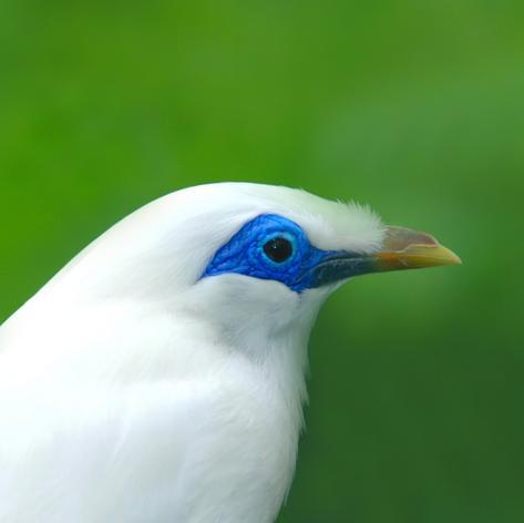 White bird on a green background