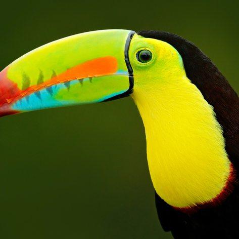 Costa Rica photo 20
