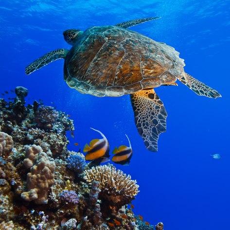 Arabian Gulf photo 15