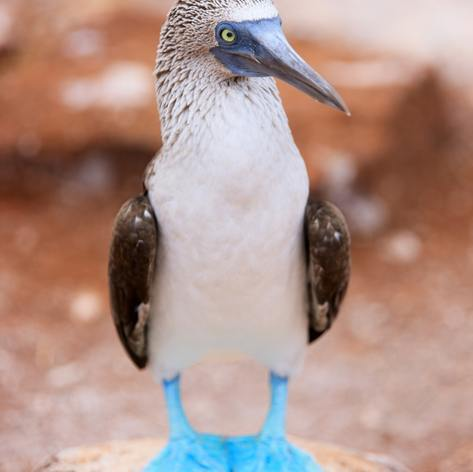 Galapagos Islands photo 8