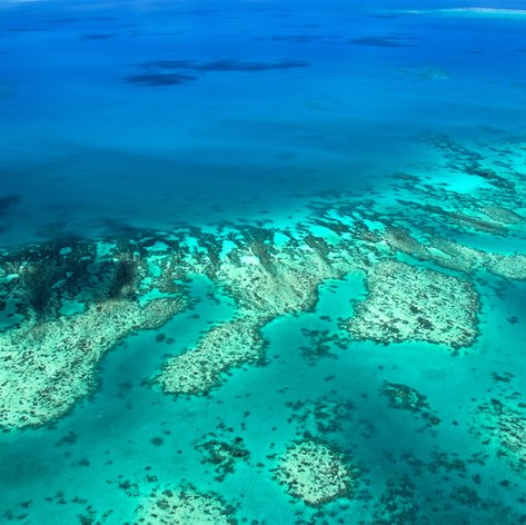 Great Barrier Reef photo 27
