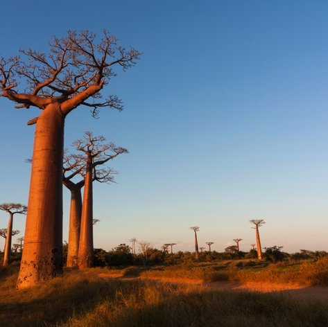 Tropical African aera in the evening