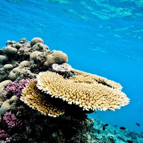 Great Barrier Reef photo 38
