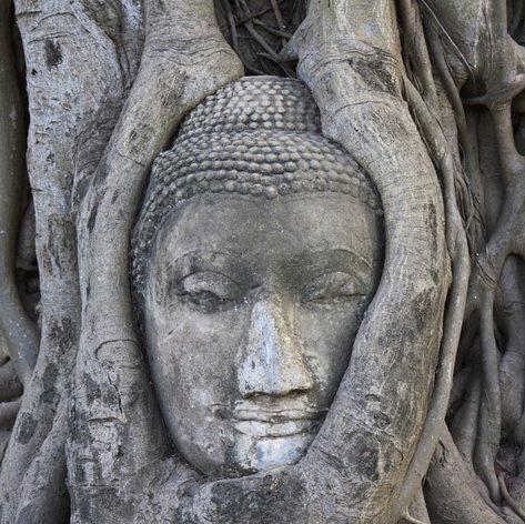 Find the Buddha's Head in Ayatthaya