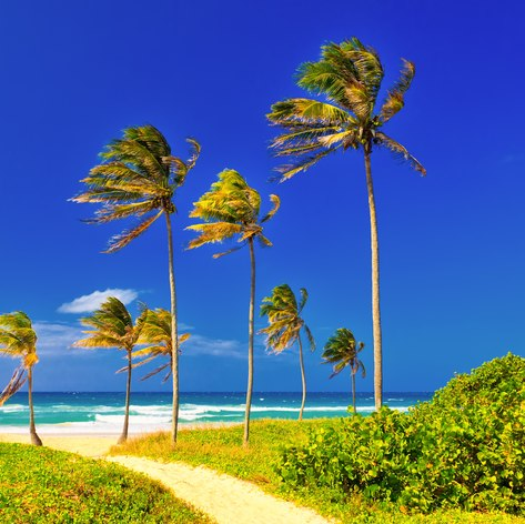 Palm trees along the road to the beach