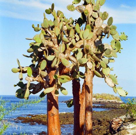 Galapagos Islands photo 14