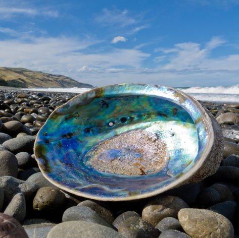 Spot a Beautiful Paua Shell on Your New Zealand Luxury Yacht Charter