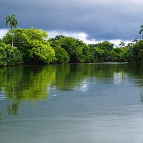 Green paradise in the middle of rain forest