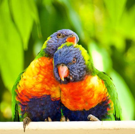Australia photo 27