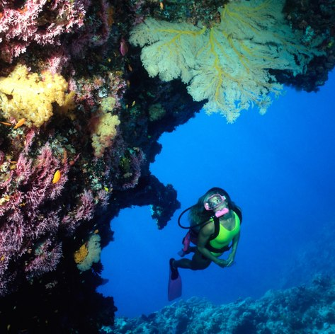 Great Barrier Reef photo 32