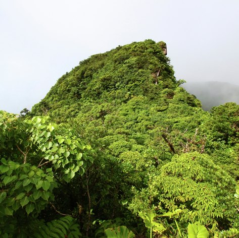 St Kitts and Nevis photo 33