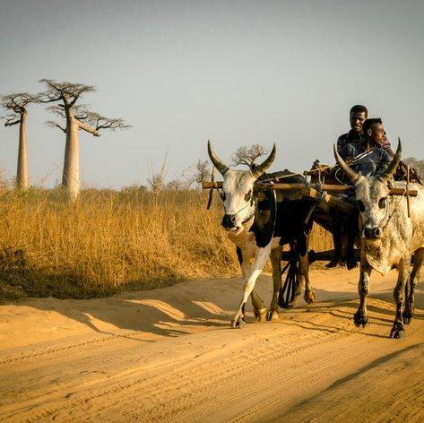 Madagascar photo 57