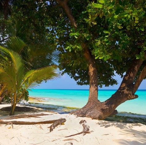 Indian Ocean photo 15