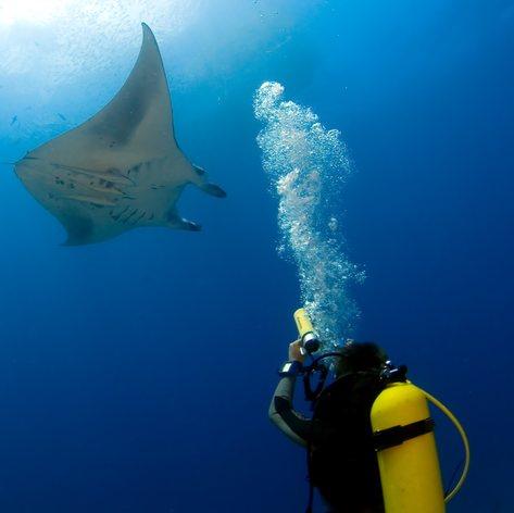 See Unforgettable Marine Life