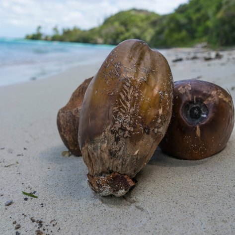New Caledonia photo 20