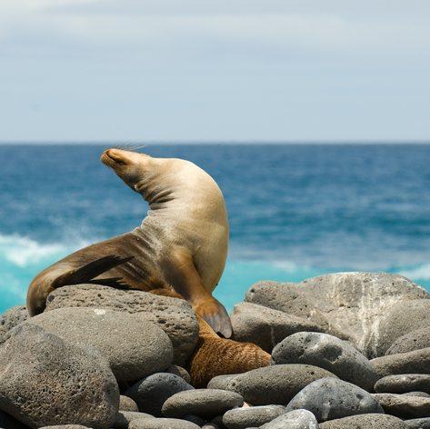 Galapagos Islands photo 9