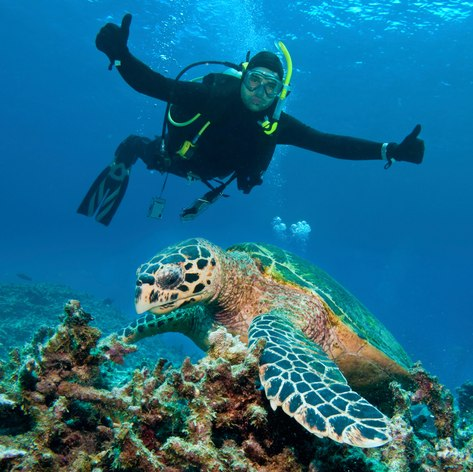 Great Barrier Reef photo 3