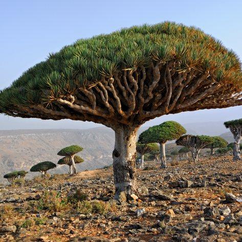 Socotra photo 33