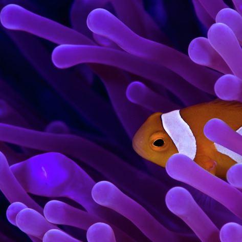 Hiding Nemo :)