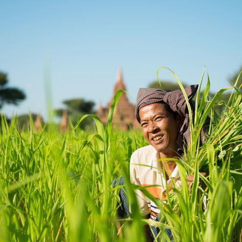 Burmese male farmer