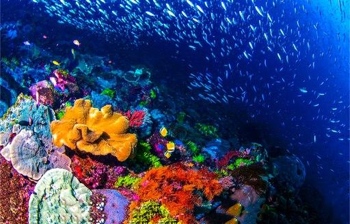 bright coral in the maldives