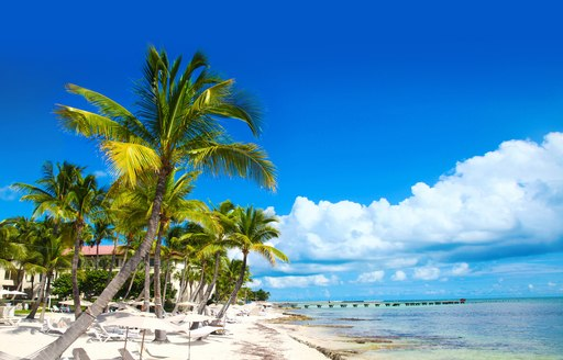 palm tree and sandy beaches in florida keys
