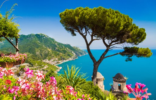 and olive tree on the hills of capri with the perfect view of the ocean where it seems fleets of superyachts cruise while on their italy yacht charter vacation