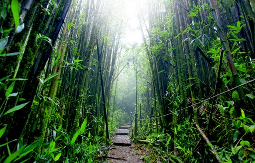 Dense undergrowth of Ascension Island
