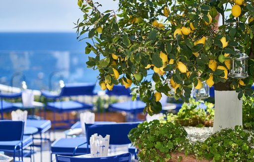 lemon tree over blue tables in italy