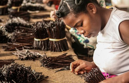 A black female worker sorts through a collection of cinnamon sticks