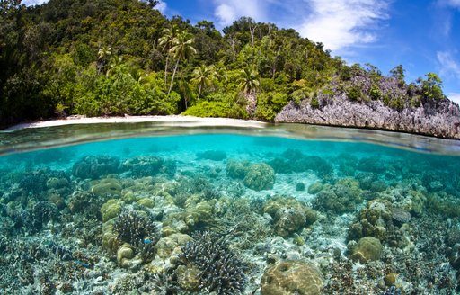 Underwater coral with jungle clad shore, Papua New Guinea