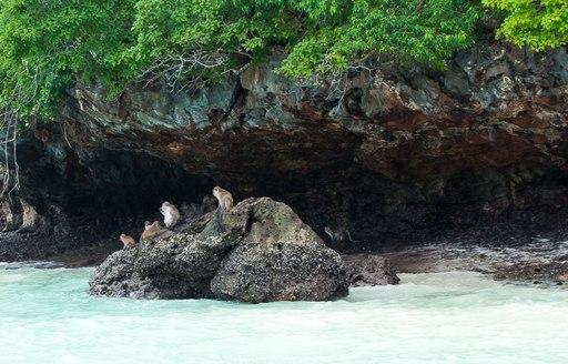 Monkeys at Monkey Bay in Thailand