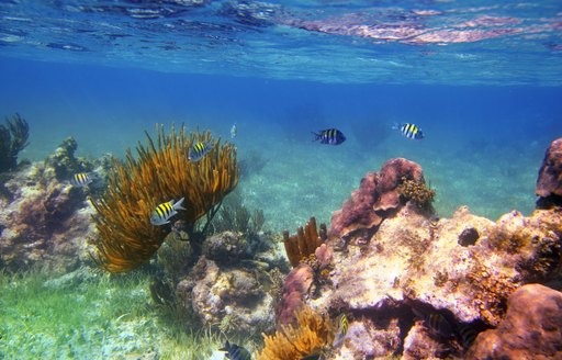 Underwater life on coral reef in Mexico