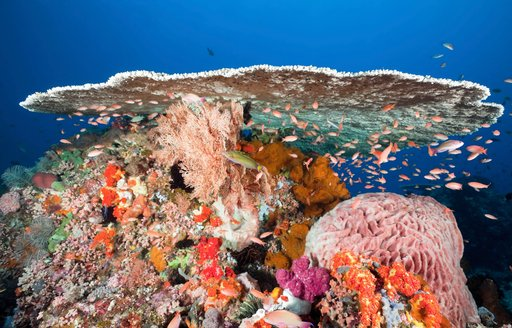 beautiful and colourful coral table in Komodo, Indonesia