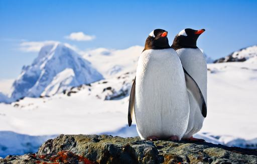 two penguins stand on a rock in the snow-clad continent of Antarctica