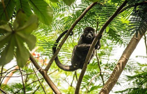 Monkeys in costa rica