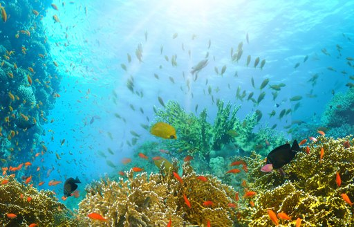 Soft and hard corals in the Red Sea surrounded by abundance of fish