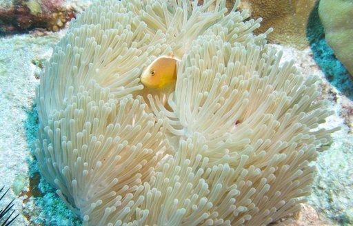 Seychelles coral life