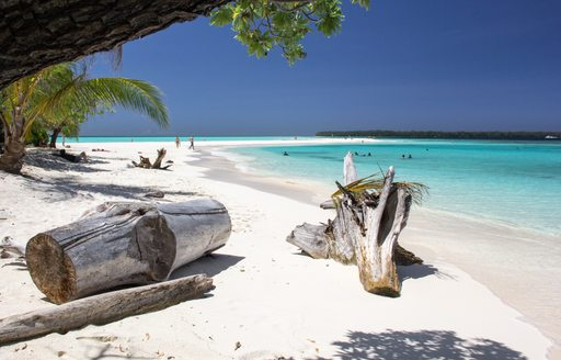 white sand beach in papua new guinea, with sun bleached tree trunks scattered over the shore